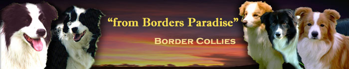 Banner_from_Borders_Paradise